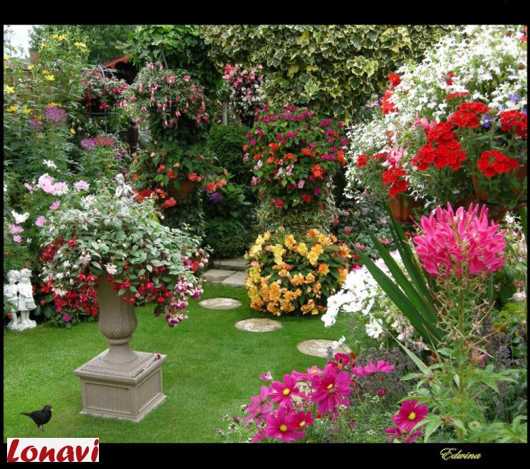 Фото красивых цветов садов