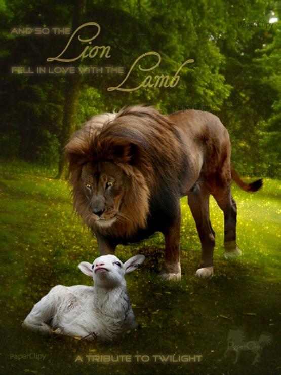 фото льва и овцы