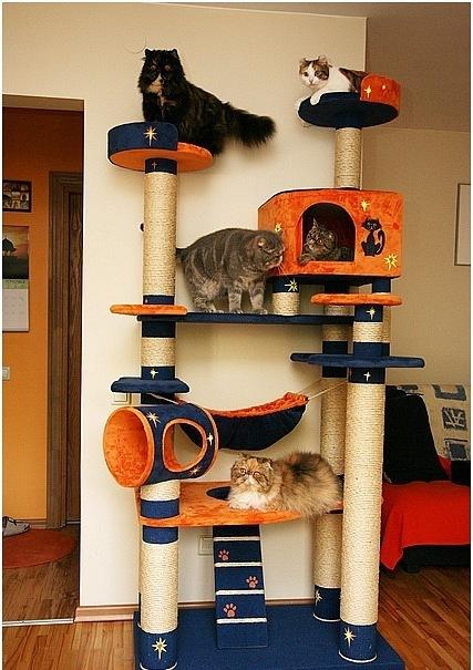 Игровой кошачий комплекс