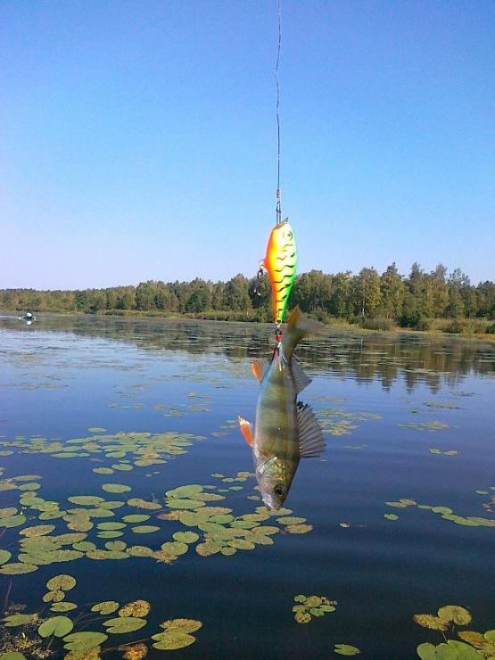 рыбалка на тростенском.озере