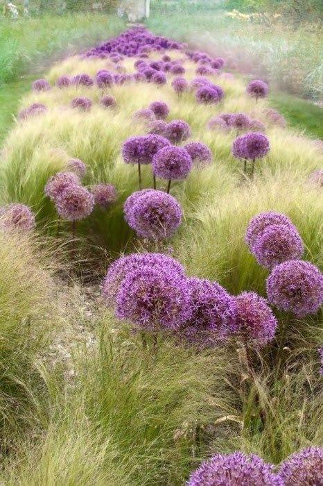 Фото декоративный лук в ландшафтном дизайне