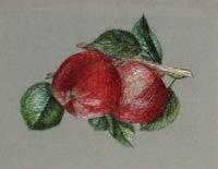 Вышивка фрукты гладью 42